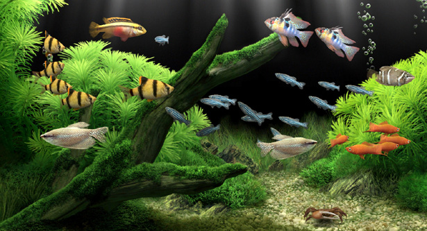 Dream Aquarium v1 0180 Full ( Net) preview 0