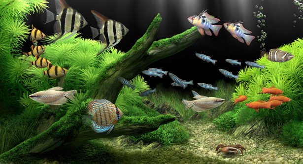 Dream Aquarium Screensaver v1.2592 x86 x64 [RePack by shurfic] {RUS}
