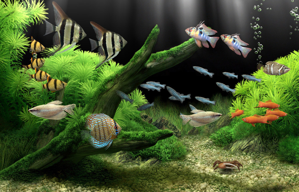 Dream Aquarium The Worlds Most Amazing Virtual Aquarium