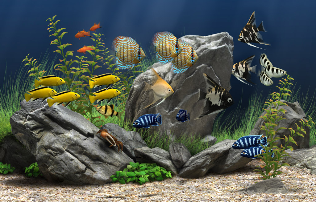 Dream aquarium the world 39 s most amazing virtual aquarium for Fish tank screen
