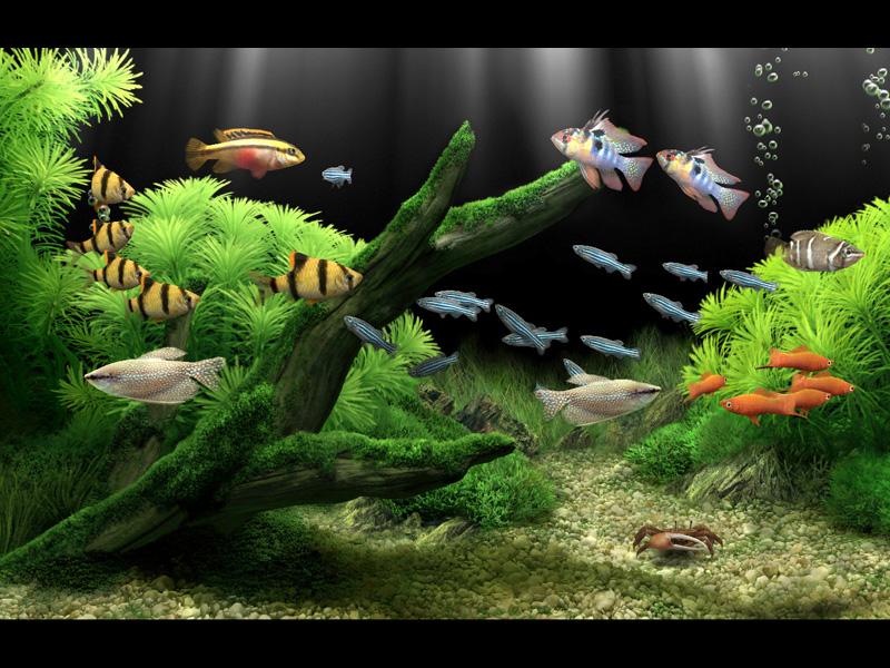 Aquarium desktop serial number